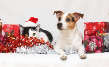 Keep Pets Safe Throughout the Holiday Season