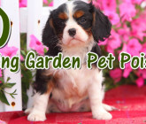 10 Pet Poisons Lurking in Your Spring Garden