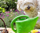 Grow These 5 Easy Herbs for Your Pets!