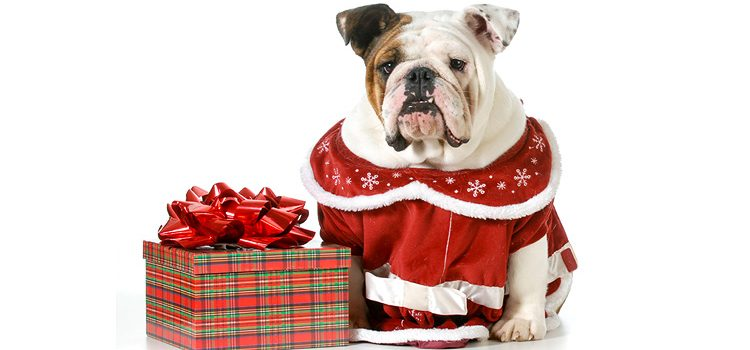 2019 Canadian Gift Guide: Pets and Pet Parents
