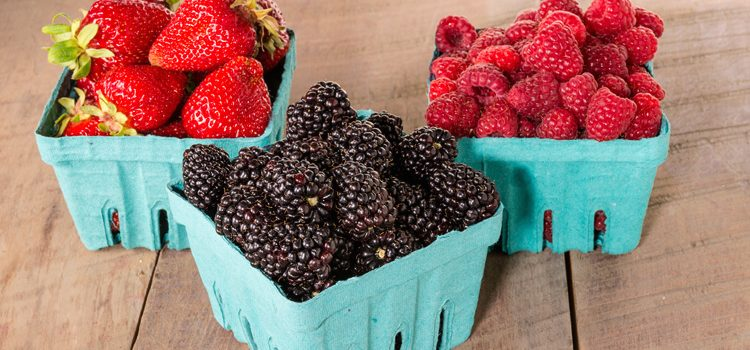 6 Easy Berry Bushes for Your Canadian Garden